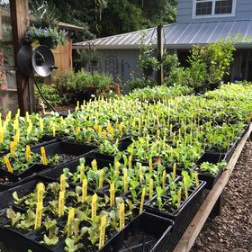 gardengatenurse - Garden Gate Nursery