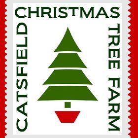 Catsfield Christmas Tree Farm
