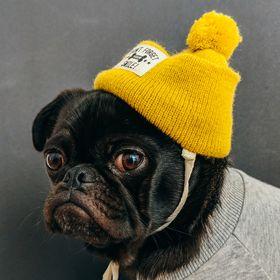 Potato Pug
