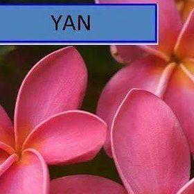 Yan Hunte