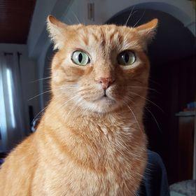 Cat Lover❤️🐱