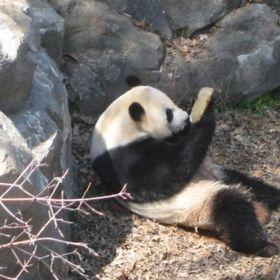 Beeg Panda