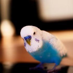 KewtieBird