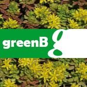 green/B