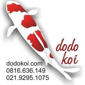 Dodo Koi rvidella