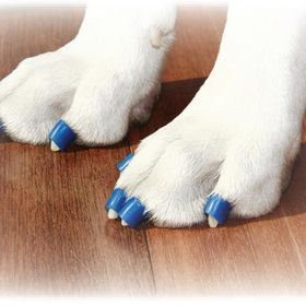 Dr Buzby S Toegrips For Dogs Toegrips On Pinterest