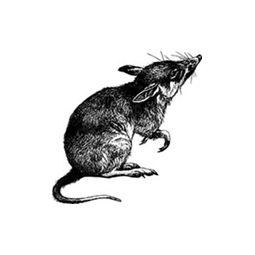 Little Rat's Boutique