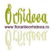 Floraria Orhideea Vaslui