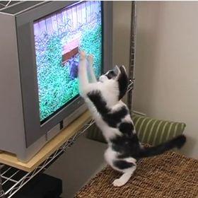 Mewvie Com Mewvies4cats On Pinterest
