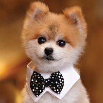 Gentleman Norman