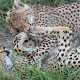 South African Safaris