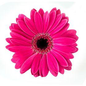 Blumen Markus