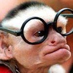 Małpa P
