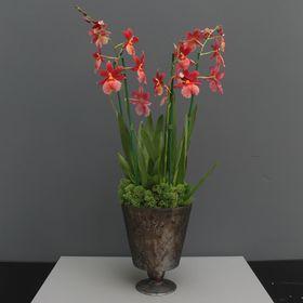 houseoforchids