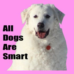 All Dogs Are Smart