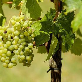 99 Wine News