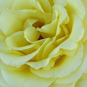 4129246bd3f2 Rose Isbell (lovedaylily) on Pinterest
