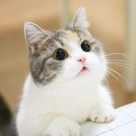 70+ Best craigslist pets ideas in 2020 | craigslist pets ...