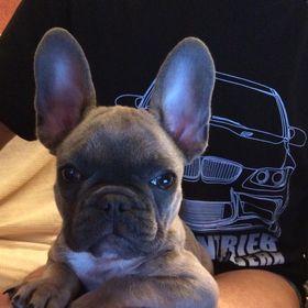 Kerzenleuchter Frenchie Bulldogge Leuchter Kerzenhalter Bully Kerzenständer Hund