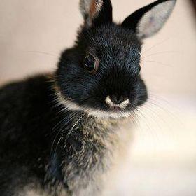wandering bunny