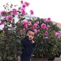 Ho Vu Ngoc Diep