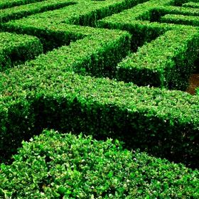 Quote Maze