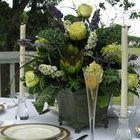 The Elegant Occasion