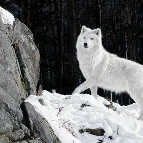Sasha Wolf