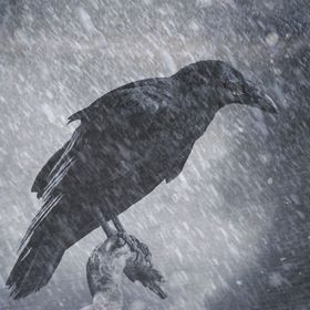 Raven Holst