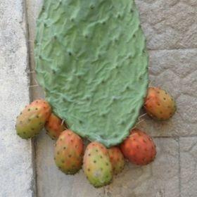 Graz Meloni