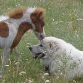 Tessa Horse Lover