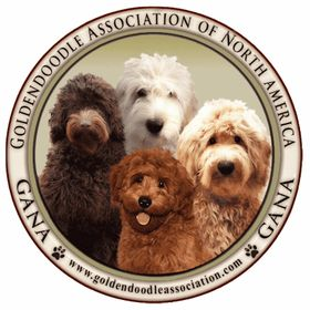 Goldendoodle Association Of North America (OfficialGANA) on Pinterest