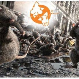 Patkányirtás | kártevőirtó