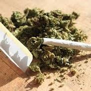 Cannabis Reality