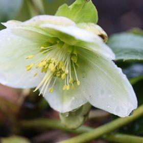 Flora Floristin
