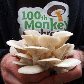 100th Monkey Mushrooms