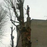 Timber Piet