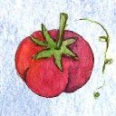 Tomato Dirt