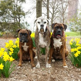 Dakota Dog Company