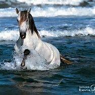 AJ Horselover