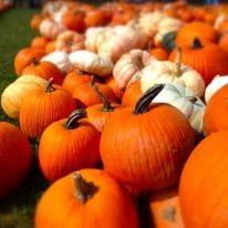 Pumpkinville