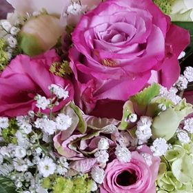 Ein Traum in rosarot 5 Oleander Steckhölzer Bewurzelungspulver