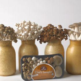Gourmet Mushrooms Inc / Mycopia