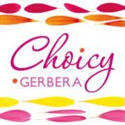 Choicy Gerbera