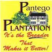 Pantego Plantation