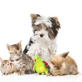 Pet Care Education