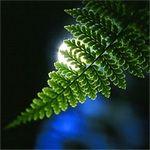 Leaf Yeh