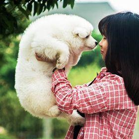 Cuten Pets