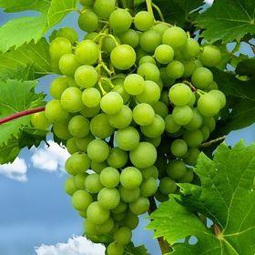 Buy Wine Online List