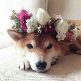 ♥ Dog Lover ♥